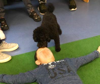 BUT Schulhund 1