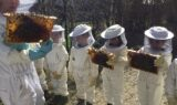 NID Bienen 6